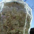 Sirop de Lilas de Cookingout