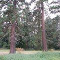 09-09-13-2-sequoia