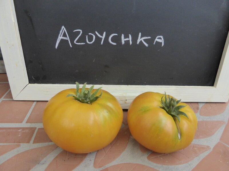 17-tomates azoychka (2)
