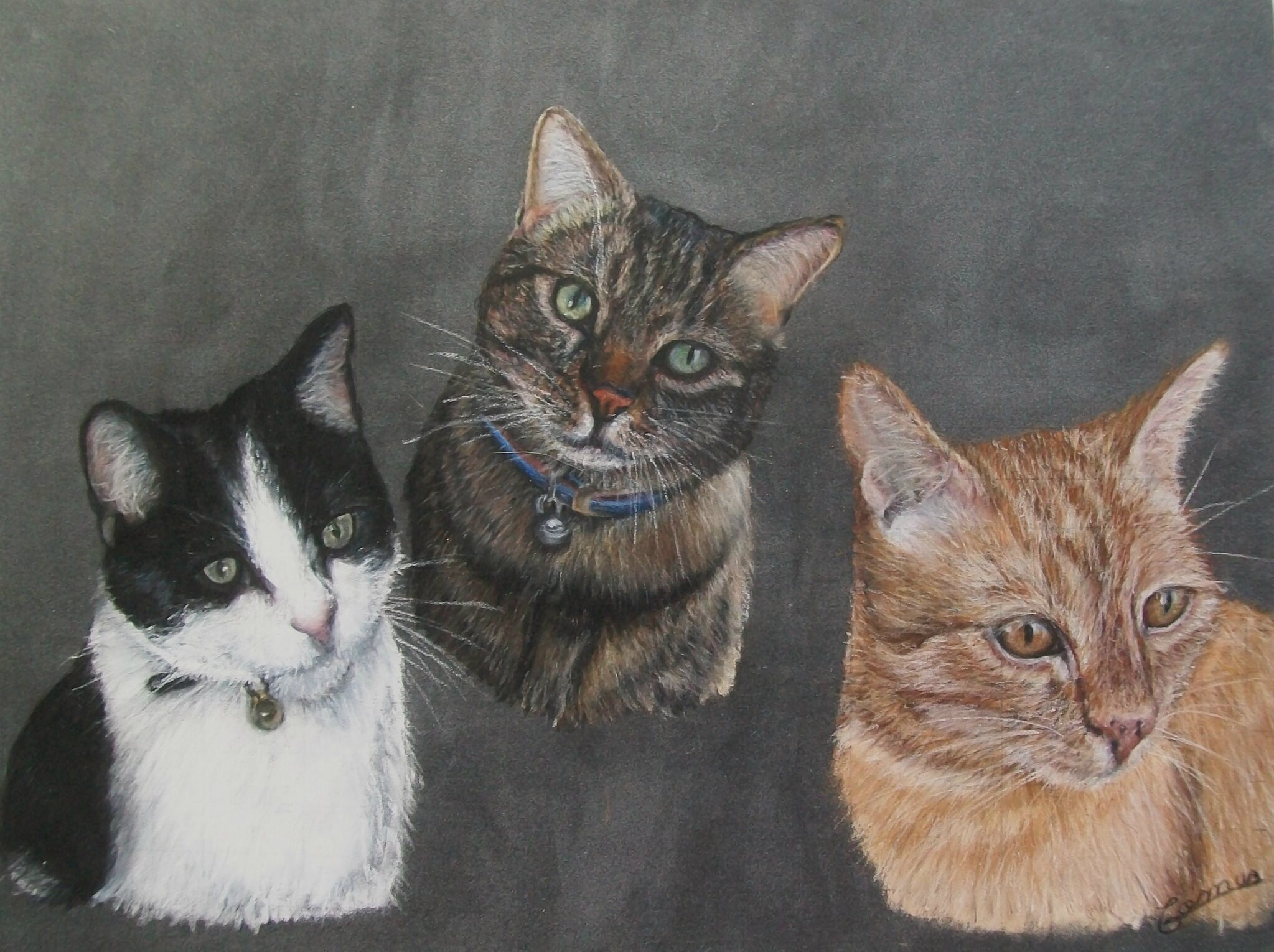trio de chats au pastel sec sur pastelmat 30 x 40 cm photo de chats isabelle comus peintre. Black Bedroom Furniture Sets. Home Design Ideas