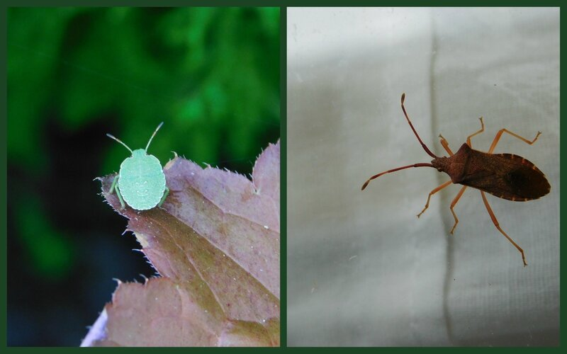 Insectes4