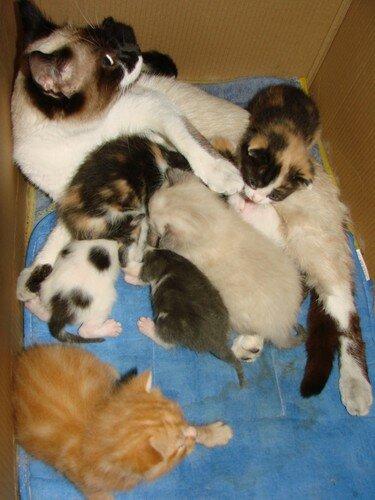 2008 04 01 Blanco avec ses chatons et ceux de Papillon