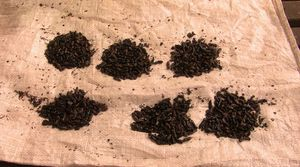Gitega, marché, termites
