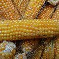 maïs pop corn - www.passionpotager.canalblog.com