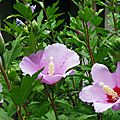 Fleurs de Léon 2107
