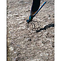 P 52 # s 17 insecte