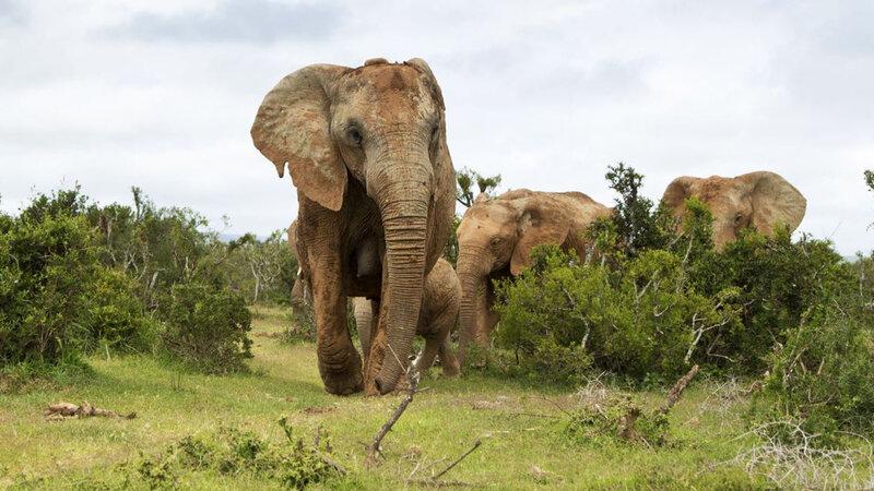 voyage-tourisme-afrique-du-sud_5169187