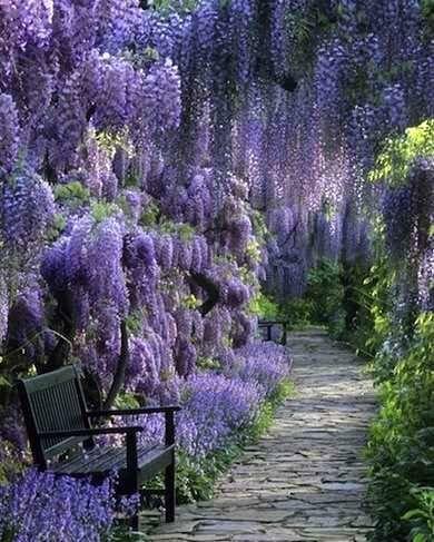 b592734b1fc593a23281b062a109547a--my-secret-garden-secret-gardens