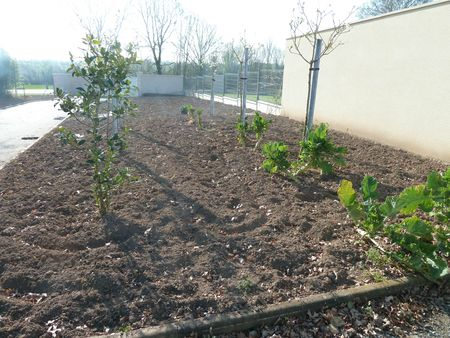 potager dbut avril (3)