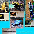 2016-10-30-AnimauxExotiques-Amphibiens