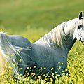 Donne un cheval à celui qui dit la vérité : il en aura besoin pour s'enfuir