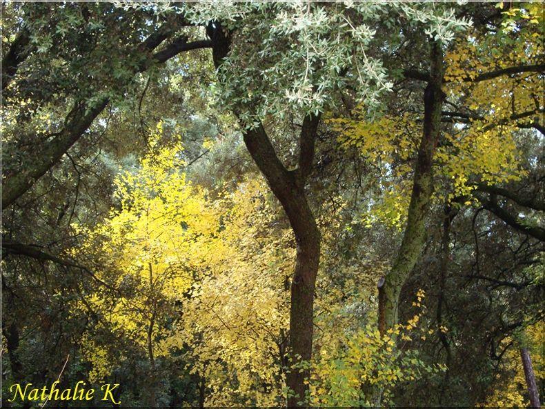 _c__LNK_le_3_novembre_2010_arbres_parc_du_chateau