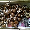 champignons