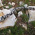Un serpent sur une pierre