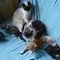 2008 04 13 Papillon et Blanco avec leur chatons