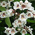 Fleurs de Leon 2406166