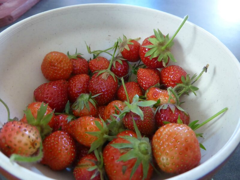 6-fraises (4)