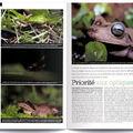 Coronelle lisse (Page de gauche, en haut) - Magazine Declic Photo, Décembre 2010