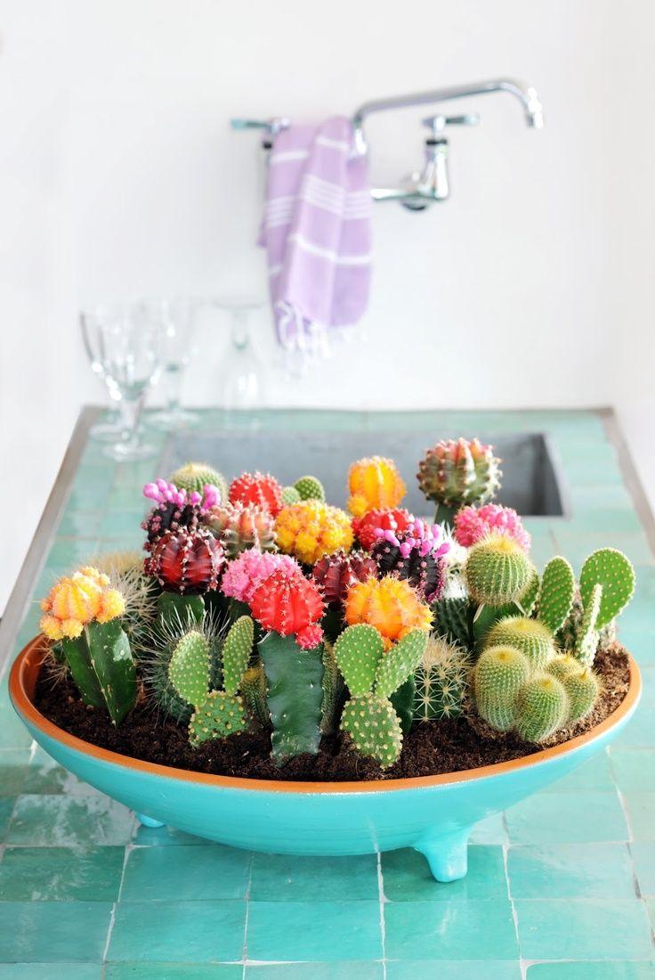 Cactus_pinterest