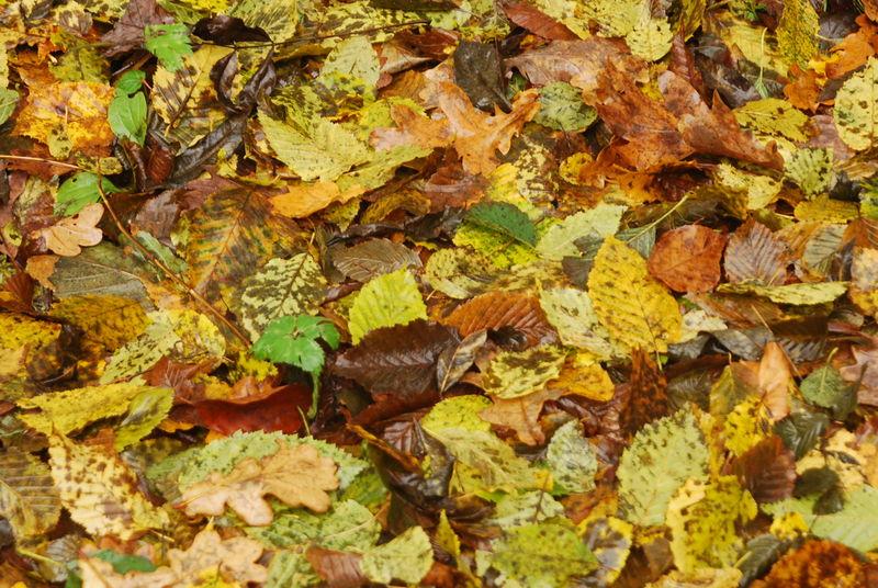 tapis de feuilles mortes si nos yeux 233 taient un appareil photo