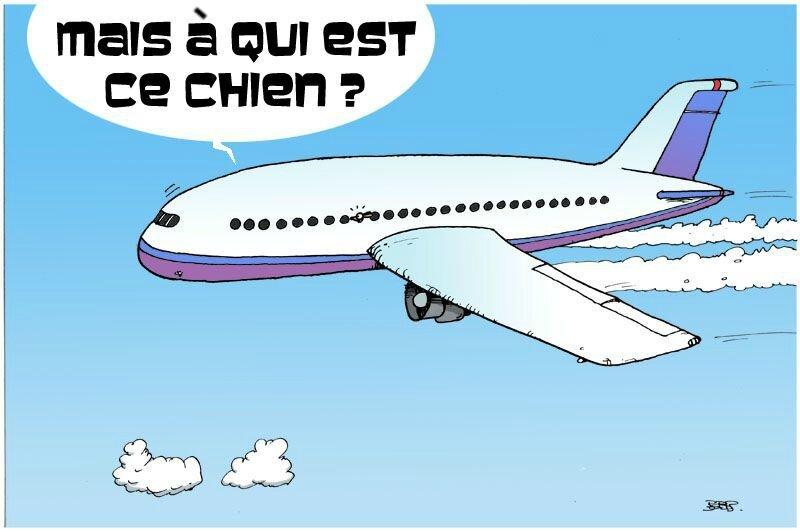 chien avion