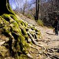 Les racines de l 'Enfer (Espagne)