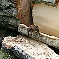 IMG_7571 a