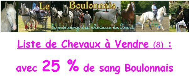 chevaux 25 boulonnais a vendre le cheval de trait. Black Bedroom Furniture Sets. Home Design Ideas