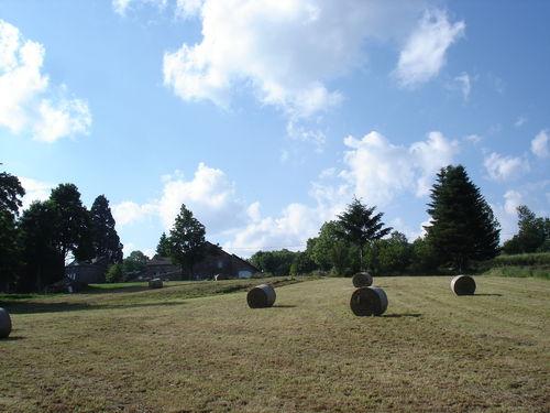 2008 07 01 Les boules de préfanages dans le champ à Faurie
