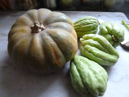 10-courge de provence et chayottes (1)