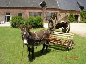 DOUDEVILLE_OFFICE_DE_TOURISME_intercommunal_Plateau_de_Caux_Fleur_de_Lin_annuaire_carrousel__1_