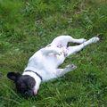 petite sieste dans l'herbe