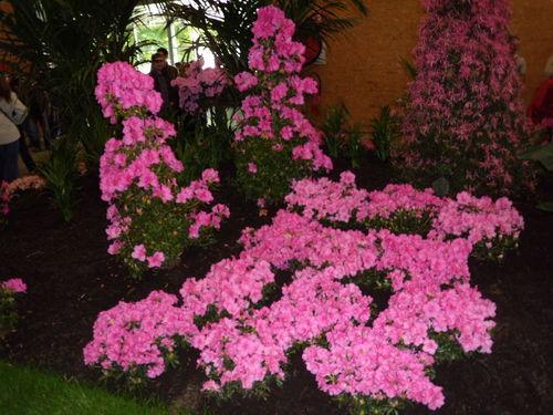 Floralies 086