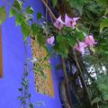  Marrakech jardin Majorelle