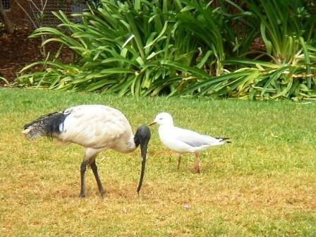 Australie Faune Flore Paysages - janvier 2005 (10)