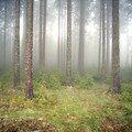 westweg... brouillard givrant