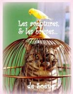cage chat oiseau