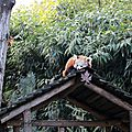 Amneville zoo 17
