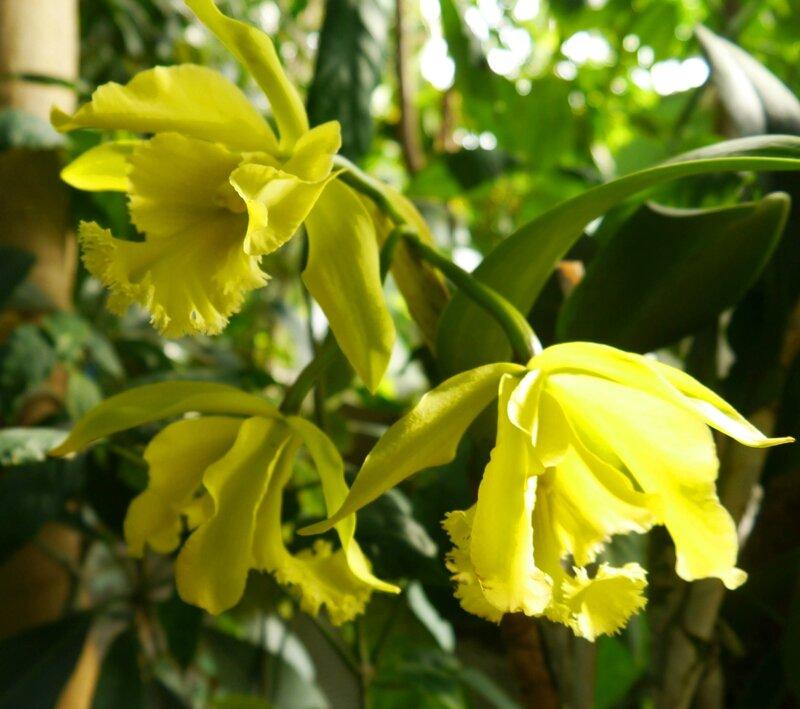 1001 orchidées (40)