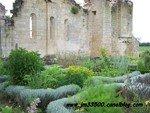 Sallebruneau - Jardin médiéval