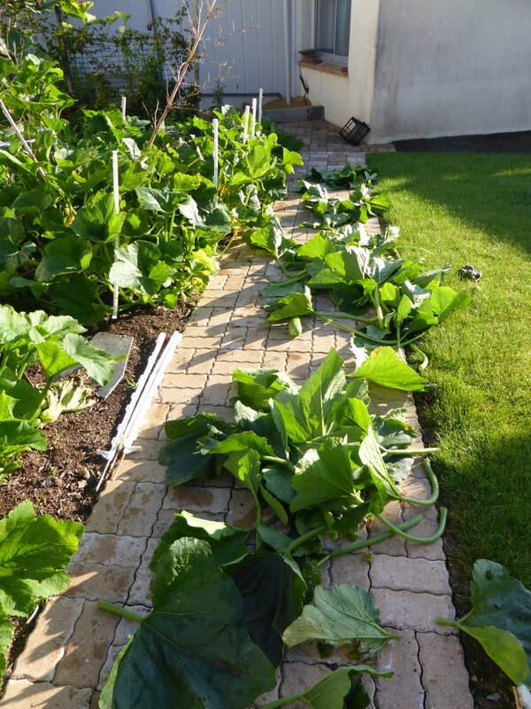 16-courgettes (2)