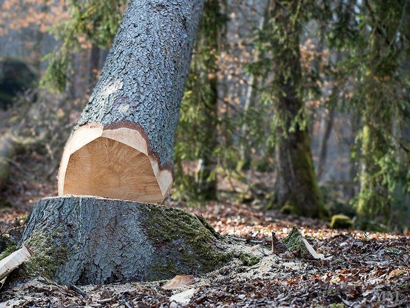 chute-arbre