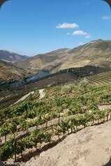 Symington-Graham-Porto-Douro-55_thumb[1]