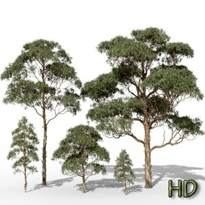 01 Eucalyptus globulus HD tasmania blue gum tropical jungle forest 3d tree Icon
