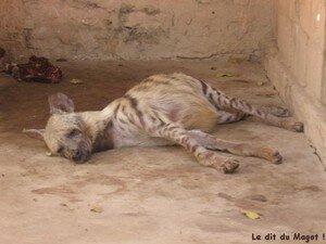 zoo_bamako_3