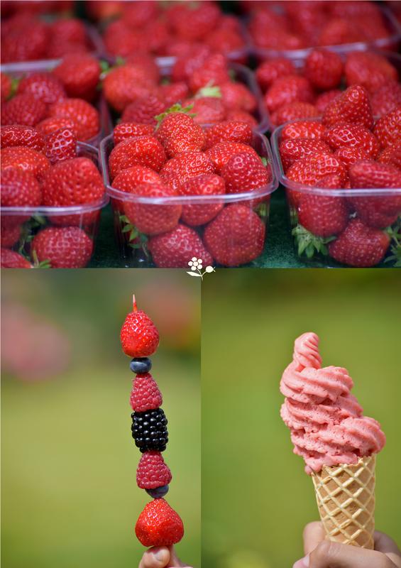 Bretagne 2015_tableau fraises de Plougastel