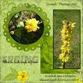 Spring (jaune)