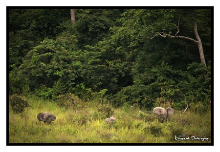 Elephant_groupe_2_2_copy