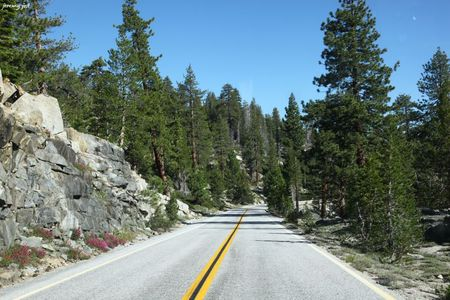 tioga pass road