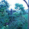 Encore et toujours du jardinage